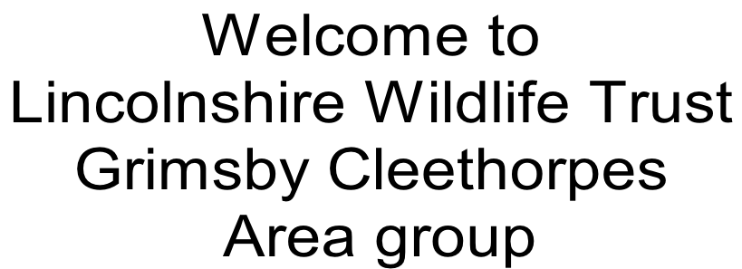 Welcome to Lincolnshire Wildlife Trust  Grimsby Cleethorpes  Area group
